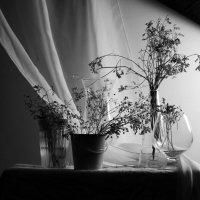 Still life :: Наталия Рачкова
