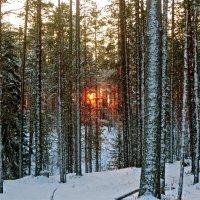 солнечный пожар за лесом :: Елена