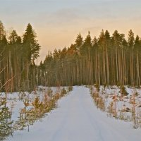 дорога в лесу :: Елена