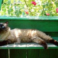 я на солнышке лежу... :: Леонид Натапов