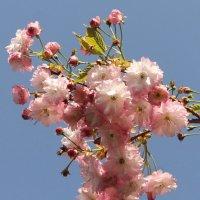 С первым днём весны! :: Вера Моисеева
