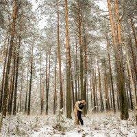 в зимнем лесу :: Andrey Stanislavovich