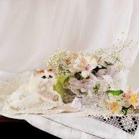 Первый весенний...или ох, уж эти кошки... :: Валентина Колова
