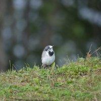 Птичка :: Светлана Ларионова