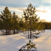зима отступает :: сергей
