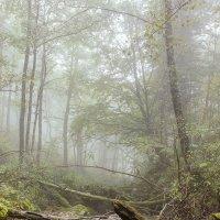 "утро в горах-098. :: ""Наиль Батталов"