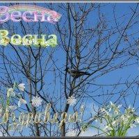 С первым днём Весны! :: ТАТЬЯНА (tatik)