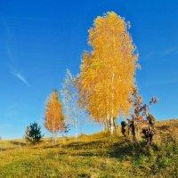золото осени :: юрий иванов
