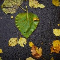 просто листья) :: Катя Шерабурко