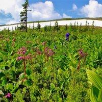 Цветы в горах :: Сергей Чиняев