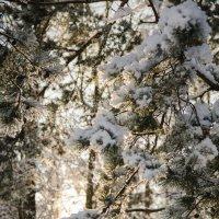 В лесу :: Анна Маклакова