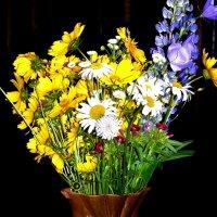 полевые цветы :: Леонид Натапов