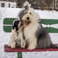 посиделки на скамейке :: Лариса Батурова