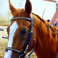 Портрет лошади :: Сергей