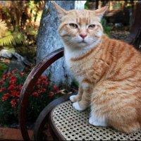 Кошка по имени Солнышко. :: Татьяна Цыганок