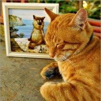Севастопольские коты :: Кай-8 (Ярослав) Забелин