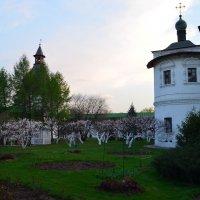 один раз в год сады цветут... :: Галина R...