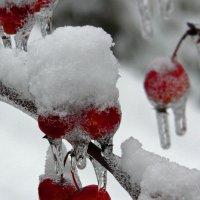 Яблоки под снегом :: Игорь Шубовичь