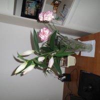 Цветы от любимого :: Наталья