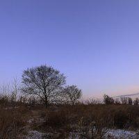 Одинокое дерево :: Юрий