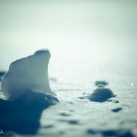 Снежный белый мишка :: Ilona An
