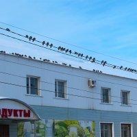 Птички на проводах :: Canon PowerShot SX510 HS