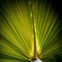 красота природы :: Астарта Драгнил