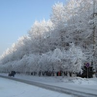 Зима, -40 градусов. :: Людмила Грибоедова
