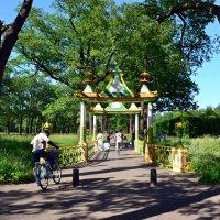 Лето в парке :: Ольга