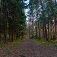 Вечер в прибрежном лесу :: Леонид Соболев