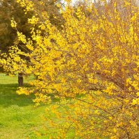 Весна :: Виктор Шандыбин