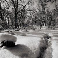 холодная и снежная.. :: Евгений nibumbum