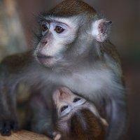 Мать и дитя. :: Татьяна