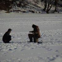 беседа на льду :: Дмитрий Паченков