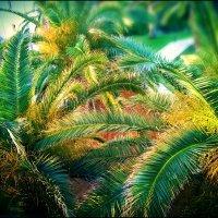 Три пальмы :: Ирина Сивовол