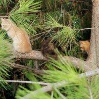 кошки на деревьях :: elena manas