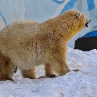 Новосибирский зоопарк. :: cfysx