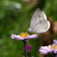 Бабочка:) :: Тамара Морозова