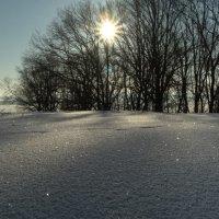 зимнее солнце :: Светлана Бродач