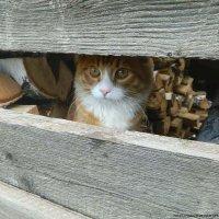 деревенский котей...Март) :: Анна