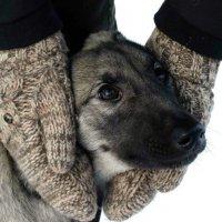 Бродячий пёс :: Alla Swan