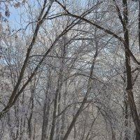 Дорожка в зимнем парке :: Сергей Тагиров