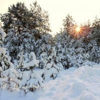 Зимний лес . :: Hаталья Беклова