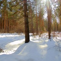На солнечной поляночке ... :: Мила Бовкун