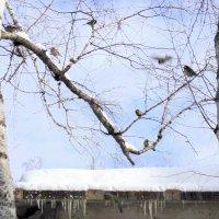 Весна идёт ! :: Мила Бовкун
