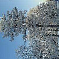 Парк зимой :: Сапсан