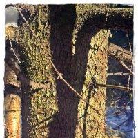 Мороз и солнце - день чудесный... :: muh5257