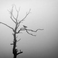 Философское дерево :: Cергей Дмитриев