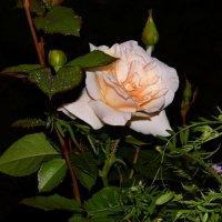 Дорогие, милые Женщины!Сердечно поздравляю Вас с самым красивым и светлым Весенним праздником!!! :: Владимир Холодный