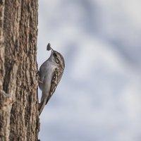 Птичка... :: Марина Назарова